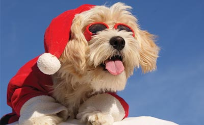 Christmas_Dogs_Maltese_511876